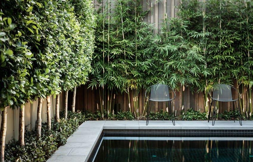 Бамбуковая живая изгородь
