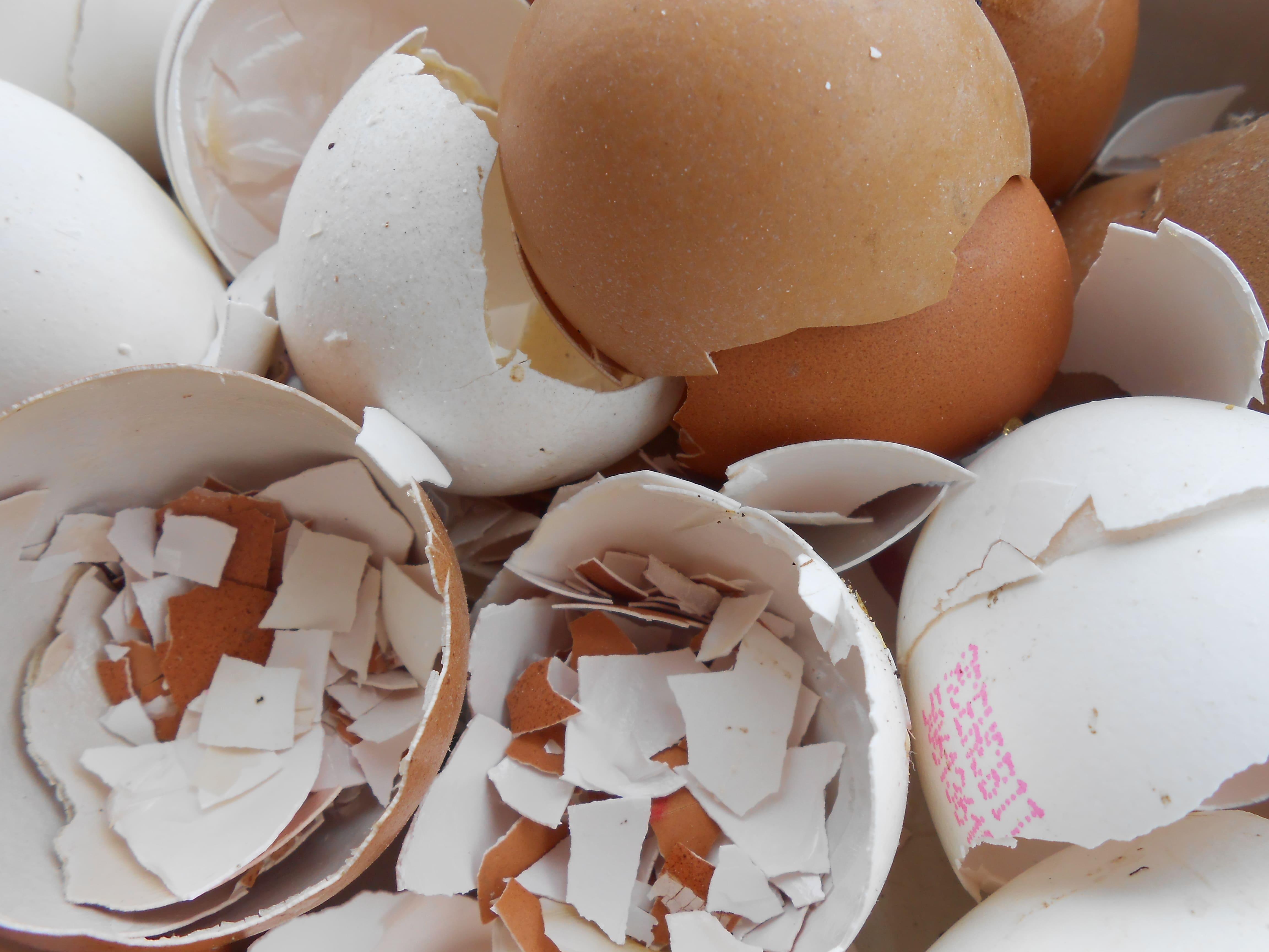 Яичная скорлупа для удобрения