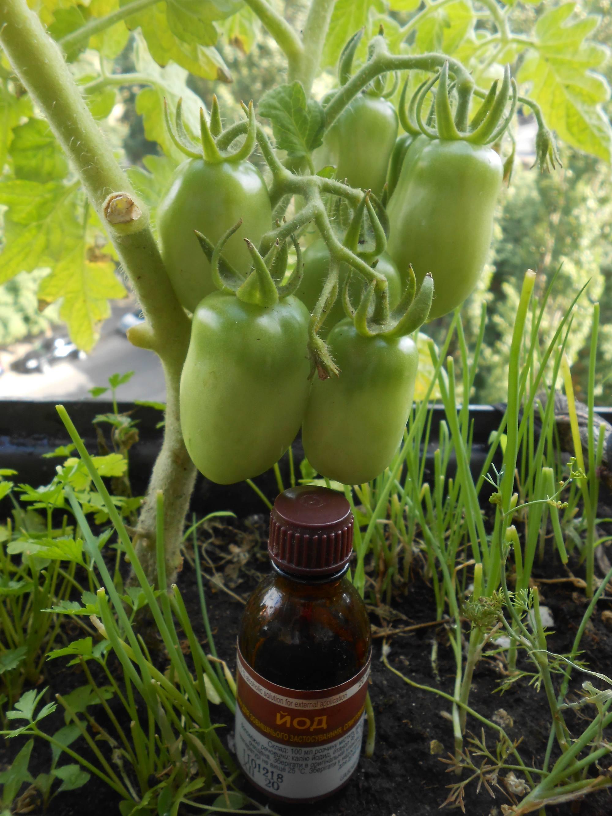 Йод для подкормки томатов