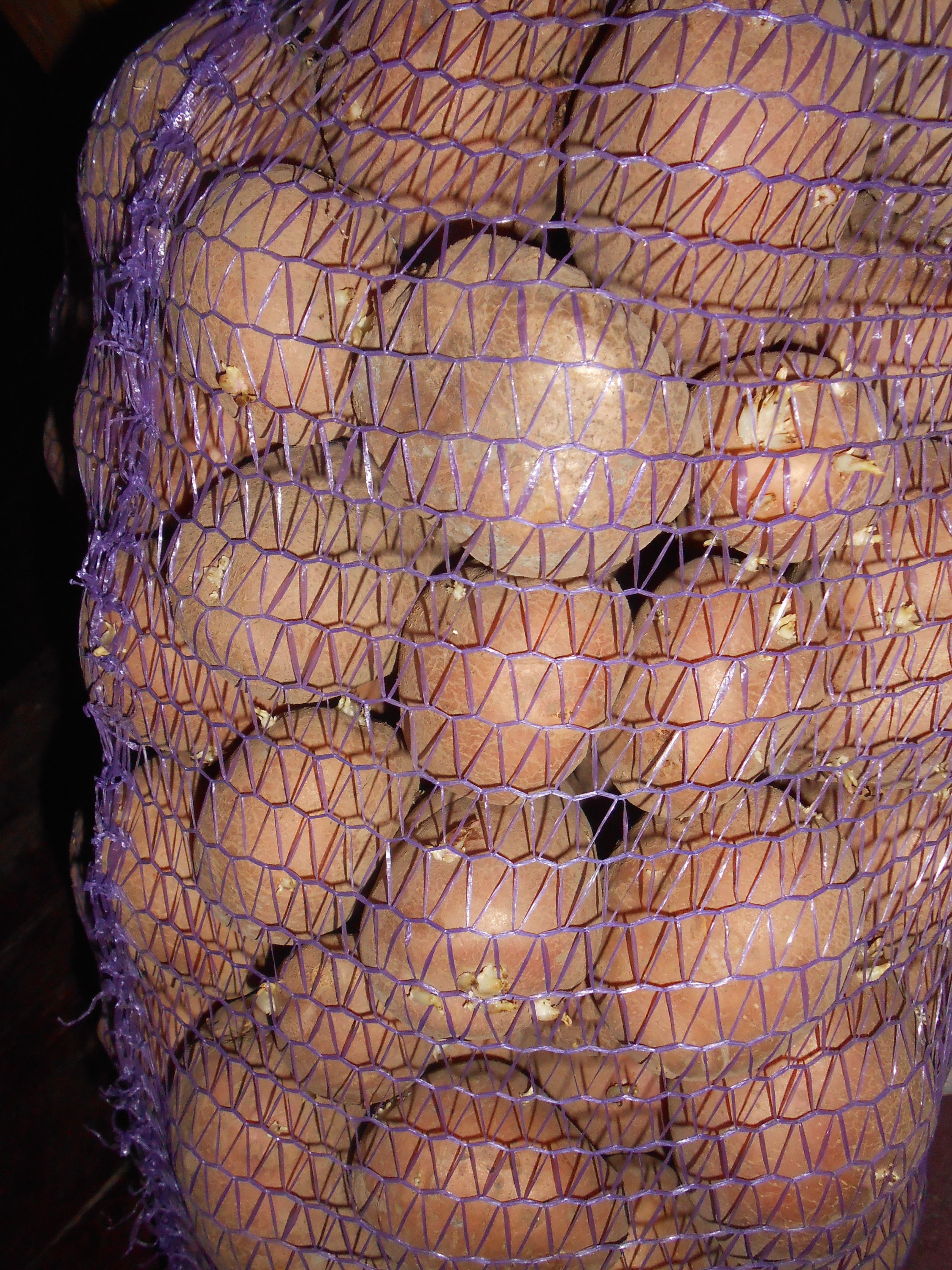 Спелые клубни картофеля в мешке